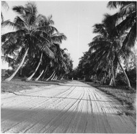 [This is probably Gulf Drive before it was paved.]