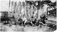 [Four happy fishermen and ten tarpon hung from a tree at Blind Pass]