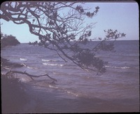 San Carlos Bay with Buttonwood and Mangrove