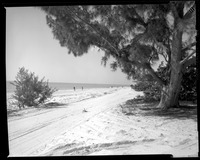 Sanibel Beach Road