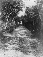 Path With Mangroves