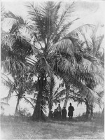 Family Under Coconut Palms
