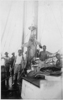 [Boys stand around a hammerhead shark hung from the mast on their sailboat around 1920]