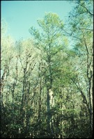 [Cypress forest and wetlands]