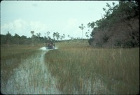 [Airboat in the Everglades]