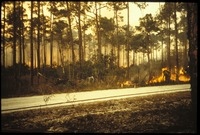 [Pinelands Fire]