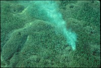 [Aerial, Small Fire Big Cypress]