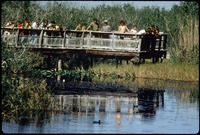[Anhinga Trail Boardwalk, 1973 Pre-Storm]