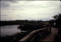[Anhinga Trail Boardwalk, 1979 Pre-Storm]