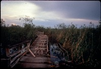 [Anhinga Trail Boardwalk]