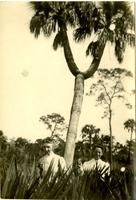 Two Koreshan women in front of split palm