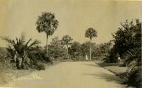 Road in the Koreshan Unity, Estero, Fla.
