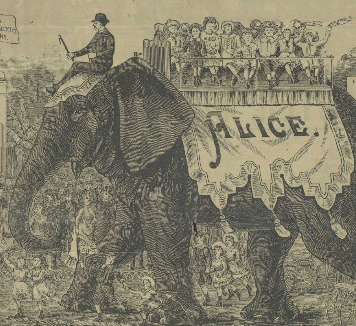 Ringling Herald Collection