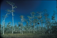 Big Cypress, Cypress Forest and Prairie