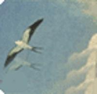 Everglades Digital Library (EDL)